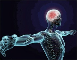 We all have the same amount of gray matter; what's going on in there?